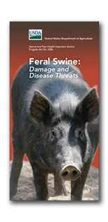 Image of feral hog brochure