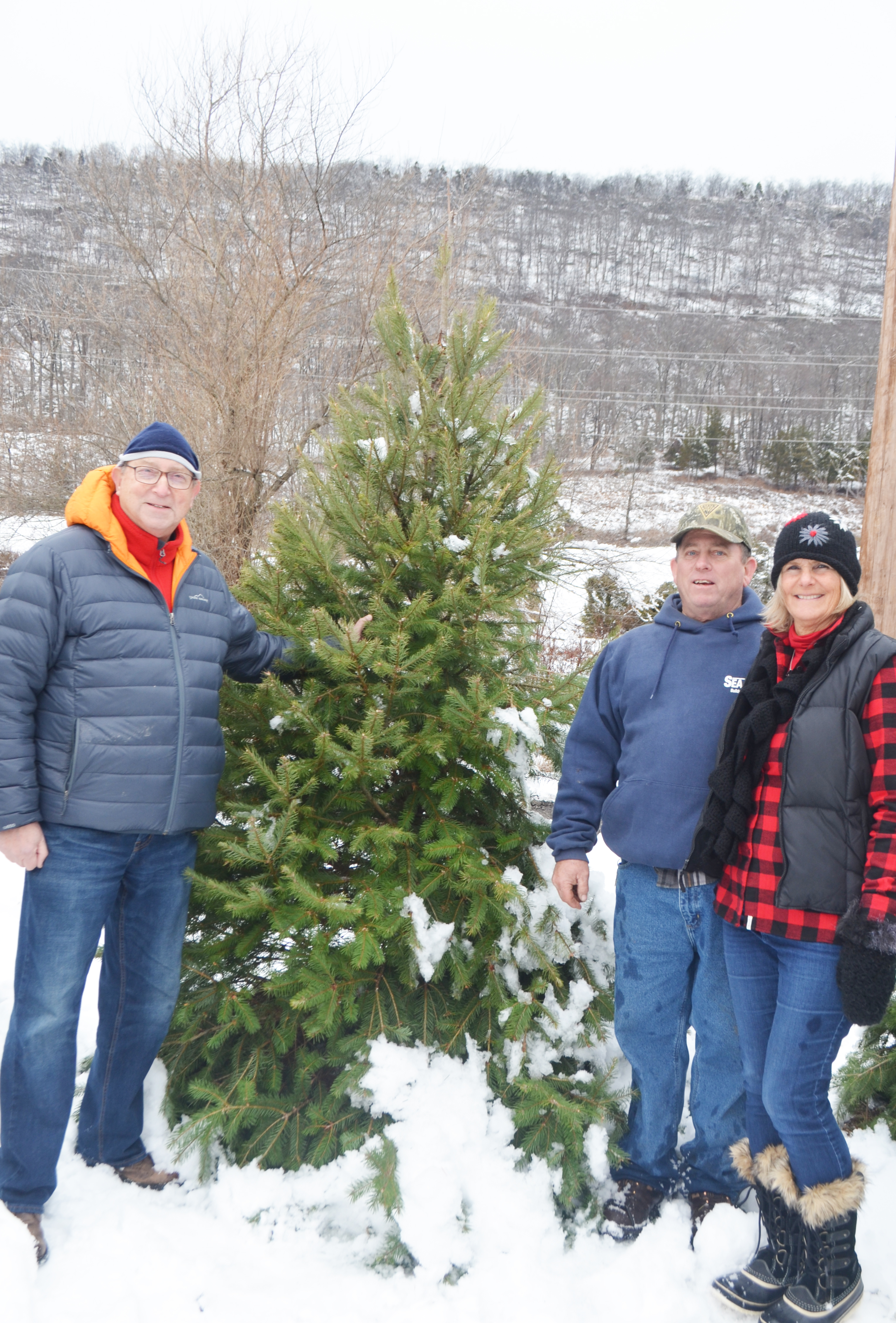 New Jersey Christmas Trees  - Click to enlarge