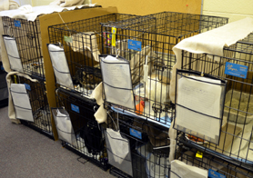 Photo of cats in cages in a Hurricane Sandy shelter - Click to enlarge