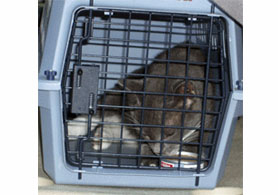 Photo of a cat in a crate - Click to enlarge