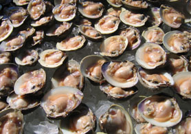 Photo of Jersey clams - Click to enlarge