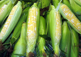 Photo of NJ sweet corn - Click to enlarge