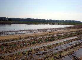 Photo of a farm field in South Jersey with standing water - Click to enlarge