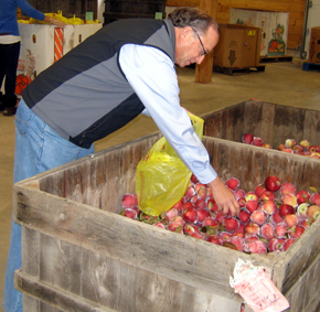 Photo of Secretary Fisher bagging apples