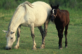 Photo of Horse and Foal - Click to enlarge