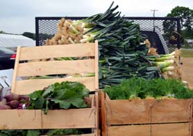 Photo of Jersey Fresh just-picked produce - Click to enlarge