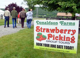 Photo of the group heading to the strawberry field for picking - Click to enlarge