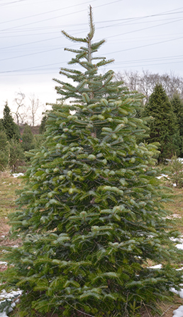 photo of single christmas tree
