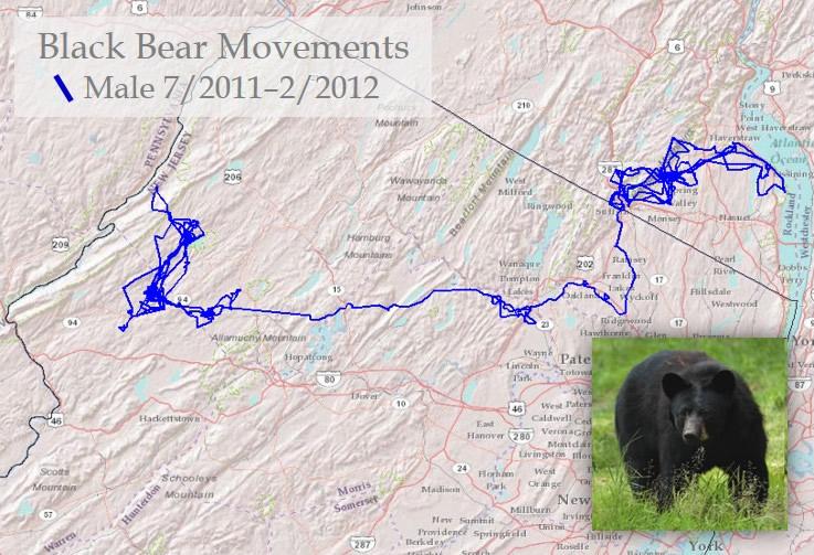 Black bear habitat map - photo#50