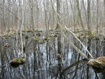 NJDEP Division of Fish & Wildlife - New Jersey's Vernal Pools