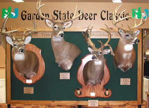 Image result for largest deer shot in new jersey
