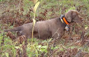Dog Training Facilities In Nj