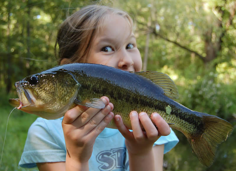 Njdep Division Of Fish Wildlife Summertime Bass Fishing Is Heating Up