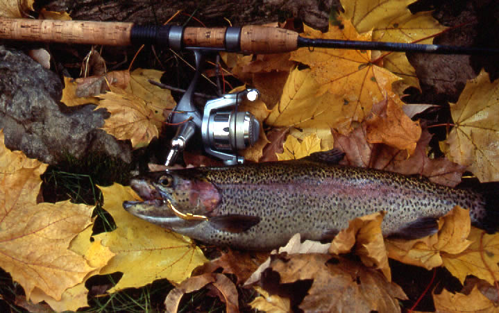 Free freshwater fishing in n j this saturday down the for Trout fishing nj