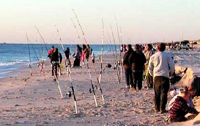 Endangered new jersey annual governor 39 s surf fishing for Surf fishing nj