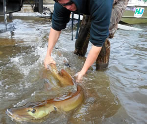 Giant muskie returned to Greenwood Lake