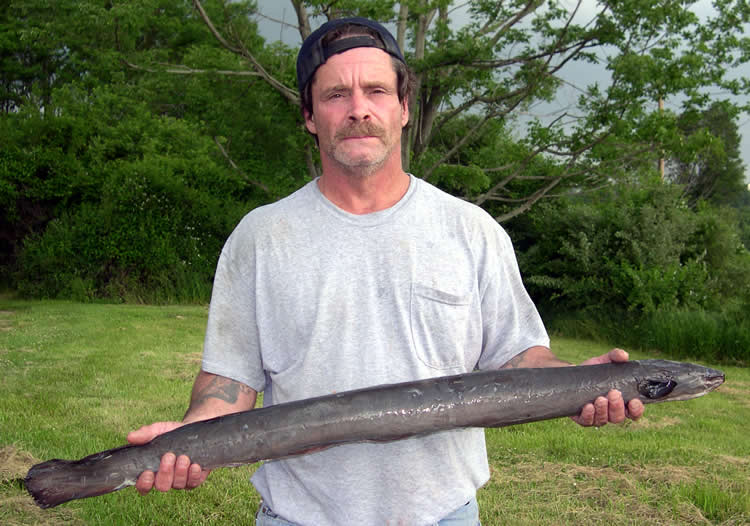 Njdep division of fish wildlife state record american for Pa fish records