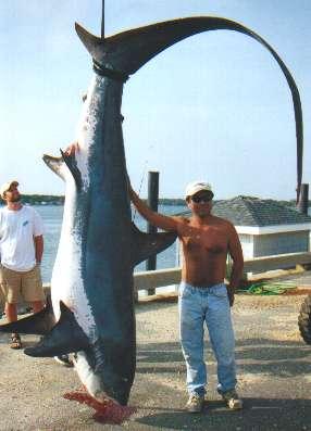 Nj record thresher shark for Shark fishing nj