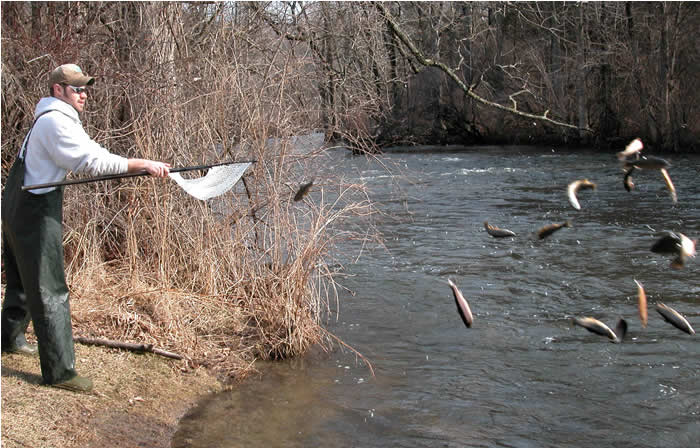 Paflyfish yellow breeches creek cumberland co 09 05 for Colorado fish stocking