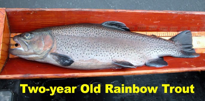 Njdep division of fish wildlife winter trout stocking for Georgia trout fishing map
