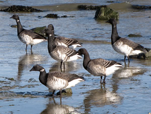 NJDEP Division of Fish & Wildlife - 2017-2018 Migratory Bird Season ...