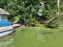 photo: July 23, 2019 Harmful Algal Bloom visible, Crescent Cove, Lake Hopatcong Source: DEP
