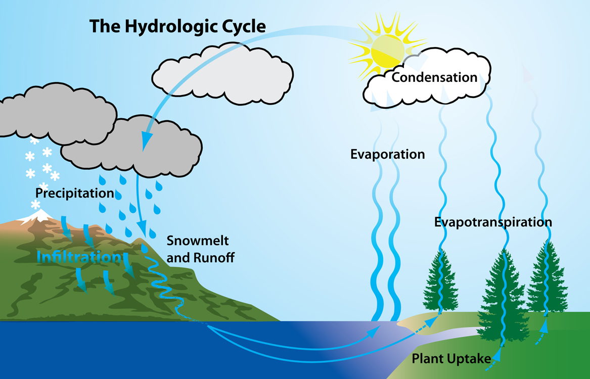 Image result for science water cycle