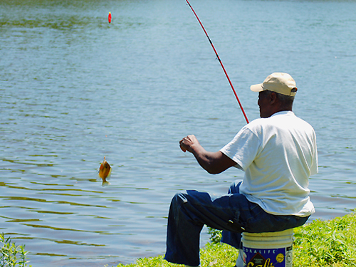 A fisherman hooks a 'small fry' at Grover's Mill Pond near Princeton Junction