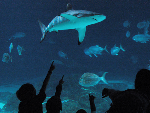 New Jersey Public Aquarium : ... Official Web Site for The State of New Jersey - Photo Gallery - Summer