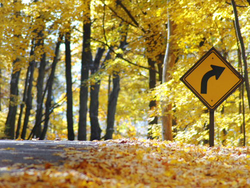 Golden leaves cover the roadway in Voorhees State Park near High Bridge