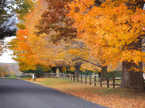 Colorful fall foliage along a country road in Hunterdon County