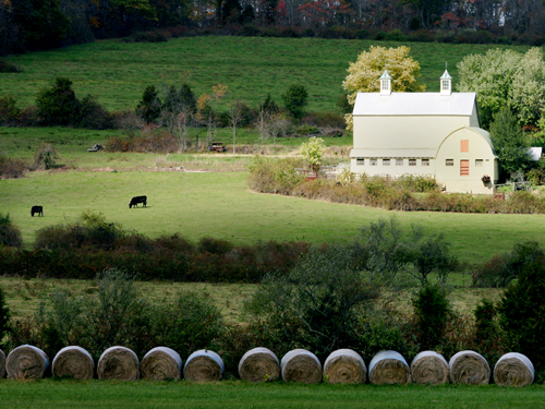 Peaceful farm setting near Sergeantsville