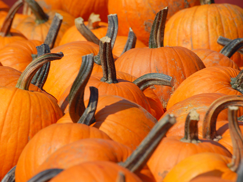 BPumpkins for sale at a roadside stand in Burlington County