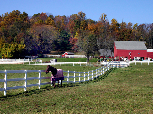 Horse farm near Califon, Hunterdon County