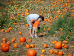 Pumpkin patch - Monmouth County