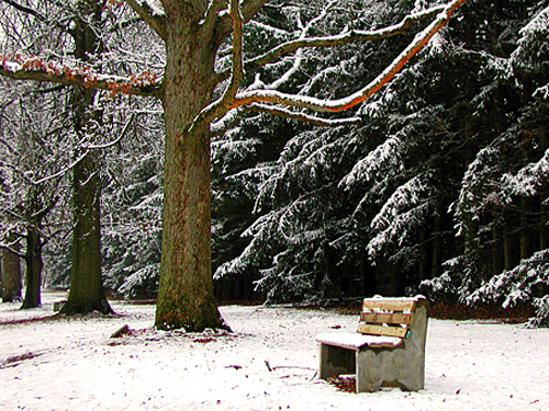 A bench dusted with snow at Washington's Crossing State Park, Mercer County