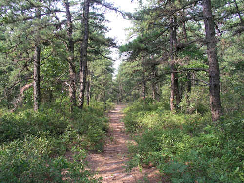 Permanently protected land in the Pinelands