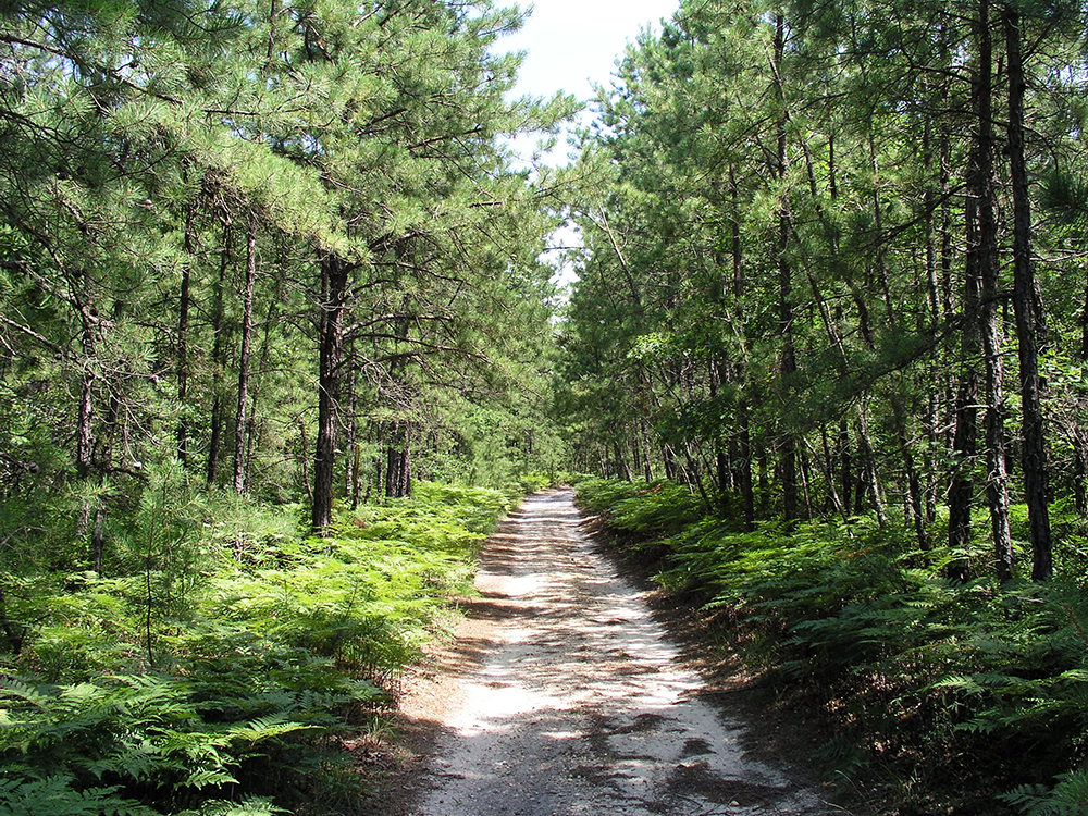 New Jersey Pinelands Commission Size