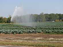 Crop Irrigation, Burlington County