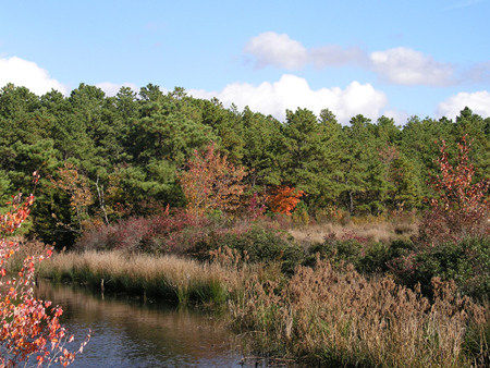 the pine barrens in new jersey should be protected In fact, chapter 33, titled the pine barrens of new jersey: an ecological mosaic   should be protected through a comprehensive land use management plan.
