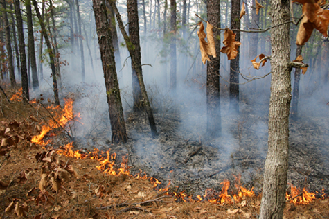 Prescribed burning in the Pinelands